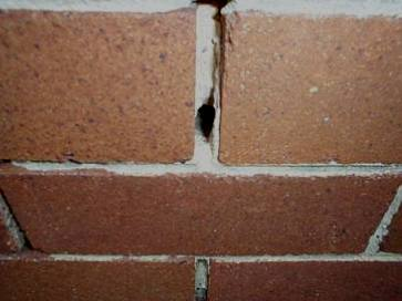 Damaged caused by masonry bees
